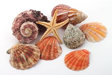 Free Star Fish And Sea Shells Royalty Free Stock Photo - 17843925
