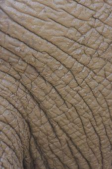 Free Elephant Skin Stock Image - 17846061