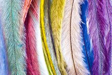 Free Feather Stock Photos - 17846213