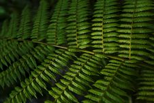 Free Green Fern Leaf Stock Image - 17847011