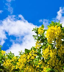 Free Yellow Flowers Against The Dark Blue Sky Stock Photo - 17849070