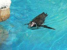 Free Penguin Royalty Free Stock Photos - 17849938
