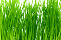 Free Isolated Green Grass Royalty Free Stock Photos - 17850568
