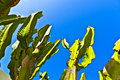 Free Cactus With Sky Royalty Free Stock Image - 17853946