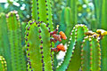 Free Detail Of Large Cactus Royalty Free Stock Images - 17854289