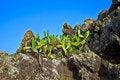 Free Detail Of Large Cactus Stock Photo - 17855270