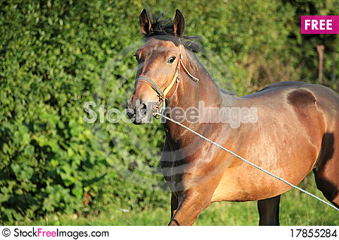 Free Brown Horse Stock Images - 17855284