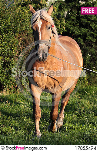 Free Brown Horse Stock Images - 17855494