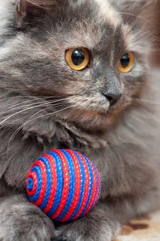 Free Cat With Ball Stock Image - 17853171