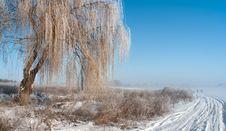 Free Foggy Frosty Morning 2 Royalty Free Stock Image - 17853186