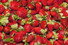 Free Fresh Strawberry Stock Photography - 17853552