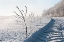 Frozen Branch Stock Image