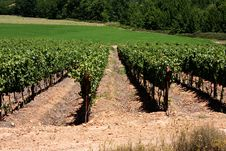 Free Vineyard Stock Photography - 17853892