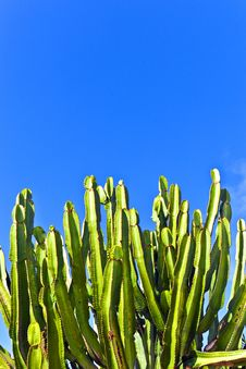 Free Cactus With Sky Stock Image - 17854011
