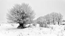 Free Cloudy Frosty Winter Day Royalty Free Stock Photos - 17854088