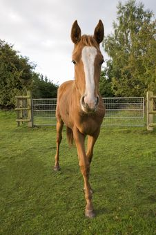 Free Horse Stock Photo - 17854330