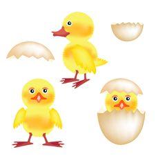 Newborn Nestling Of The Hen Stock Photos
