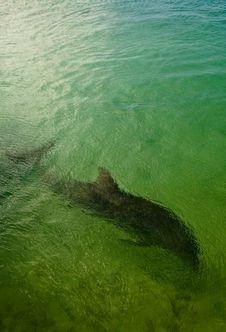 Free Dolphin Stock Photo - 17854730