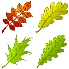 Leaves Of Plants, Set Royalty Free Stock Images