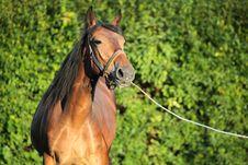 Free Brown Horse Stock Photos - 17855363
