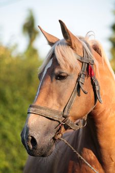 Free Brown Horse Stock Photo - 17855590