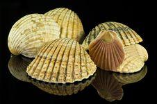 Free Seashells Royalty Free Stock Images - 17859399