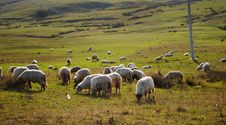 Free Sheep On The Land Stock Photos - 17859483