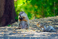 Free Groundhog & Squirrel Have Lunch Royalty Free Stock Photography - 17865577