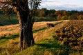Free Ukrainian Countryside Landscape Royalty Free Stock Photo - 17866895