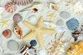 Free Starfish And Shells Royalty Free Stock Photo - 17868195