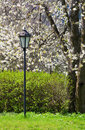 Free Blooming Spring Park Stock Images - 17869014