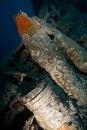 Free 15   Shells On The SS Thistlegorm. Royalty Free Stock Photo - 17869375