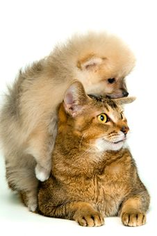 Free Cat And Puppy Stock Photography - 17861882