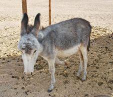 Free Donkey Royalty Free Stock Photo - 17862325