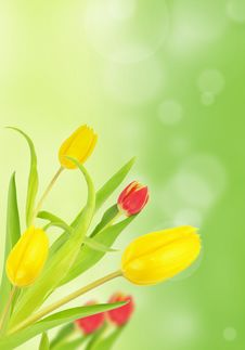 Free Tulips Stock Images - 17863364