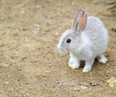 Free Little Rabbits Stock Photography - 17866842