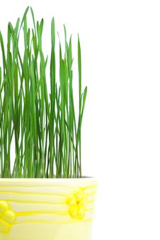 Free Green Grass In Yellow Flowerpot Stock Image - 17867611
