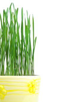 Green Grass In Yellow Flowerpot Stock Image