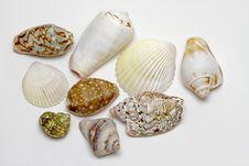 Free Sea Shells Stock Photography - 17868142