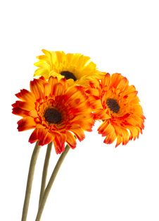 Free Three Artificial Flowers Royalty Free Stock Photography - 17868177