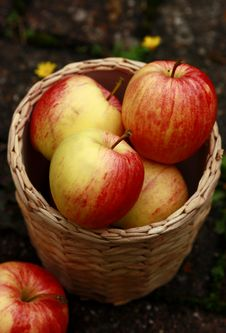 Free Apples Royalty Free Stock Images - 17869209