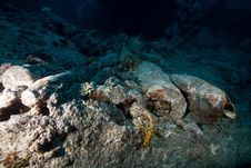 Free 15  Shells On The SS Thistlegorm. Royalty Free Stock Photography - 17869467