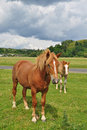 Free Horses On A Pasture Stock Photography - 17871782