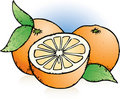 Free Oranges Sketch Royalty Free Stock Photos - 17872648