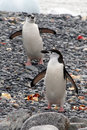 Free Penguin Stock Images - 17875724