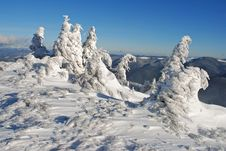 Free Winter  Firs Under Snow Stock Photos - 17871123