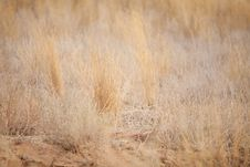 Free Dry Grass Stock Photography - 17871172