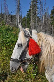 Free Head Of A Horse Royalty Free Stock Image - 17871386