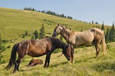 Free Horses On A Hillside Stock Photo - 17871440