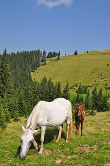 Horses On A Hillside Stock Images